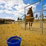 """""""the horse bucket"""" by daviddeehoeng"""