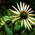 """Heavenly Petals"" by JudyTodd"