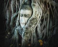 Head of Buddha in a Tree