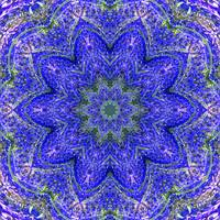 Blue and Purple Lavender Floral Kaleidoscope