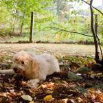 """""""Favorite leafy spot"""" by Kalabird"""
