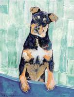 Cody The Rottwieler Puppy by RD Riccoboni
