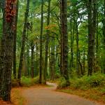 """""""Woods, Assateague"""" by ReimeiPhotography"""