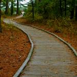 """Wood Path, Assateague (color)"" by ReimeiPhotography"