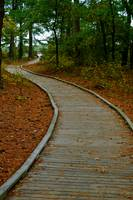 Wood Path, Assateague (color)