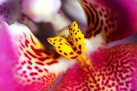 Flower macro orchid yellow pink