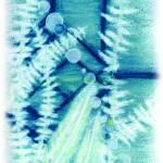 """Blue Ferns"" by saraalexandermunoz"