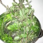 """""""garden herbs"""" by mrsw"""