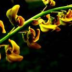 """Yellow Flower"" by chrisbutler"