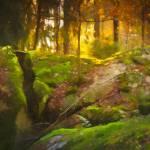 """""""Fairytale Forest"""" by LutzBaar"""
