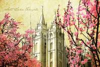 Salt Lake Temple (pink blossoms)