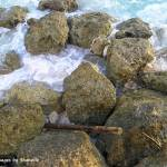 """Rocks by the Seashore 1"" by shanelle"