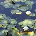 """""""Lake Hopatcong"""" by anewjoy"""
