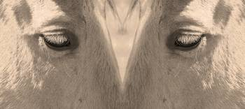 Horse Eyes Sepia Love