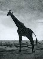 Giraffe pencil study