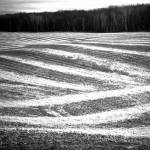 """Harvest Lines"" by Trailheads"