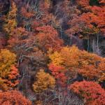 """""""Blue Ridge Parkway Fall Foliage"""" by mindseyecreative"""