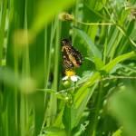 """""""butterfly in a field"""" by ske"""