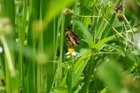 butterfly in a field