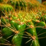 """The Cactus"" by ske"
