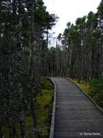 Forest Boardwalk 3260