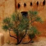 """Santa Fe - Adobe Building and Tree"" by Ffooter"