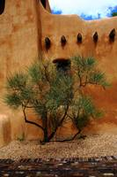 Santa Fe - Adobe Building and Tree