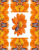 Bumble Study of Orange Zinnia Photo Quilt