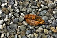 Leaf on rocks