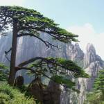 """A beautiful green pine in the yellow mountain"" by Jean999"