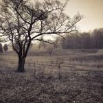 """Spotsylvania Battlefield"" by hicklinphotography"
