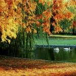 """Dunavski Park"" by HarisNikolovski"