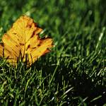 """Leaf"" by HarisNikolovski"