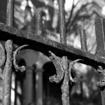 """Iron Fence Black and White"" by nicolerachelle"