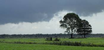 Dutch countryside with solitary trees and rain.