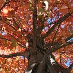 """Autumn tree"" by aimeesblog"