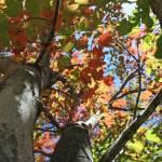 """Kaleidoscope tree"" by aimeesblog"