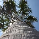 """""""Palm"""" by aimeesblog"""