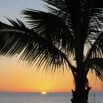 """Palm Sunset 2"" by auNaturale"