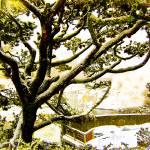 """bonsai dream"" by Retrograph"