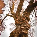 """tortured plum tree"" by Retrograph"