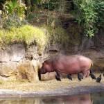 """Hippopotamus For Christmas"" by kristysphotography"