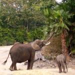 """Mama Elephant feeding Baby"" by kristysphotography"