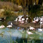 """""""Pretty In Pink Flamingos"""" by kristysphotography"""