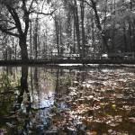 """""""Mirror Pond"""" by geoffallen"""