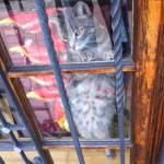 """""""Playful Cat in a Store Window"""" by nahone"""