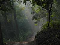Corbett national park forest