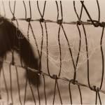 """horseweb"" by ErinKyle"