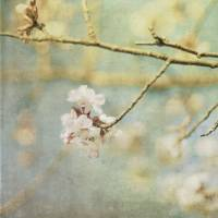 Spring 1 Art Prints & Posters by Sarah Franklin