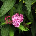 """Pink Spring"" by nicholasjnawroth"
